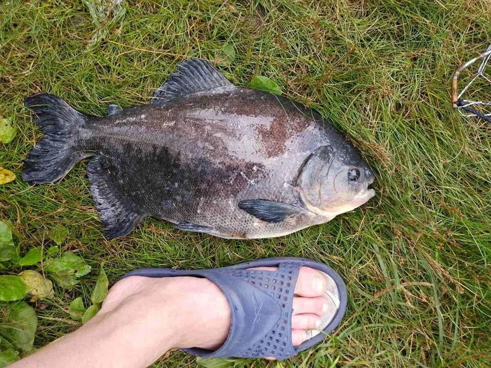 Мужчина рыбачил на маленьком озере на Позняках.
