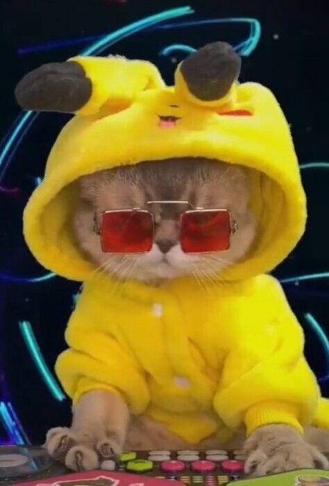 Кот Скай стал популярным.