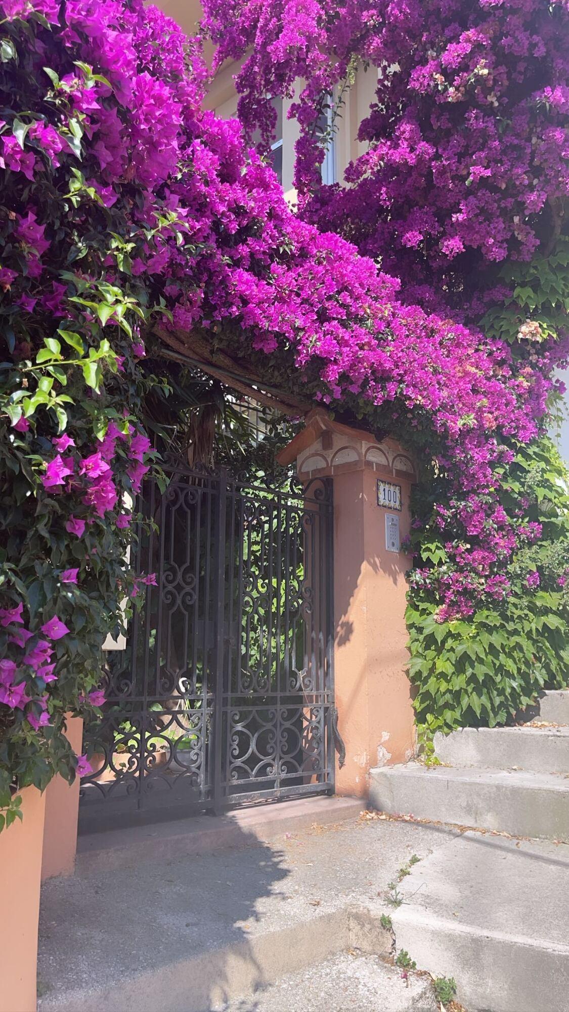 Цветы в Монако