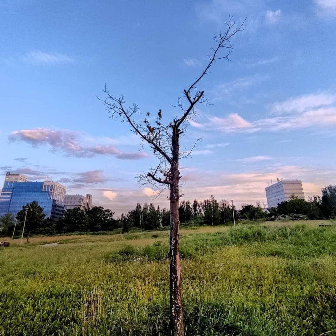 """Дерево в парку біля """"Донбас Арени"""""""