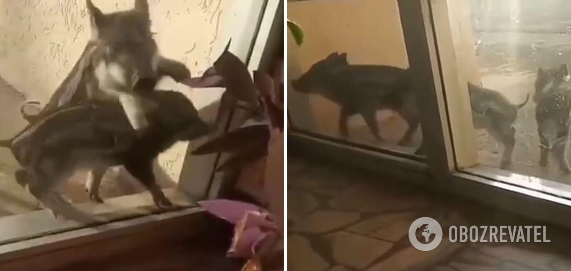 """Животные """"стучались"""" в окно здания АЭС"""