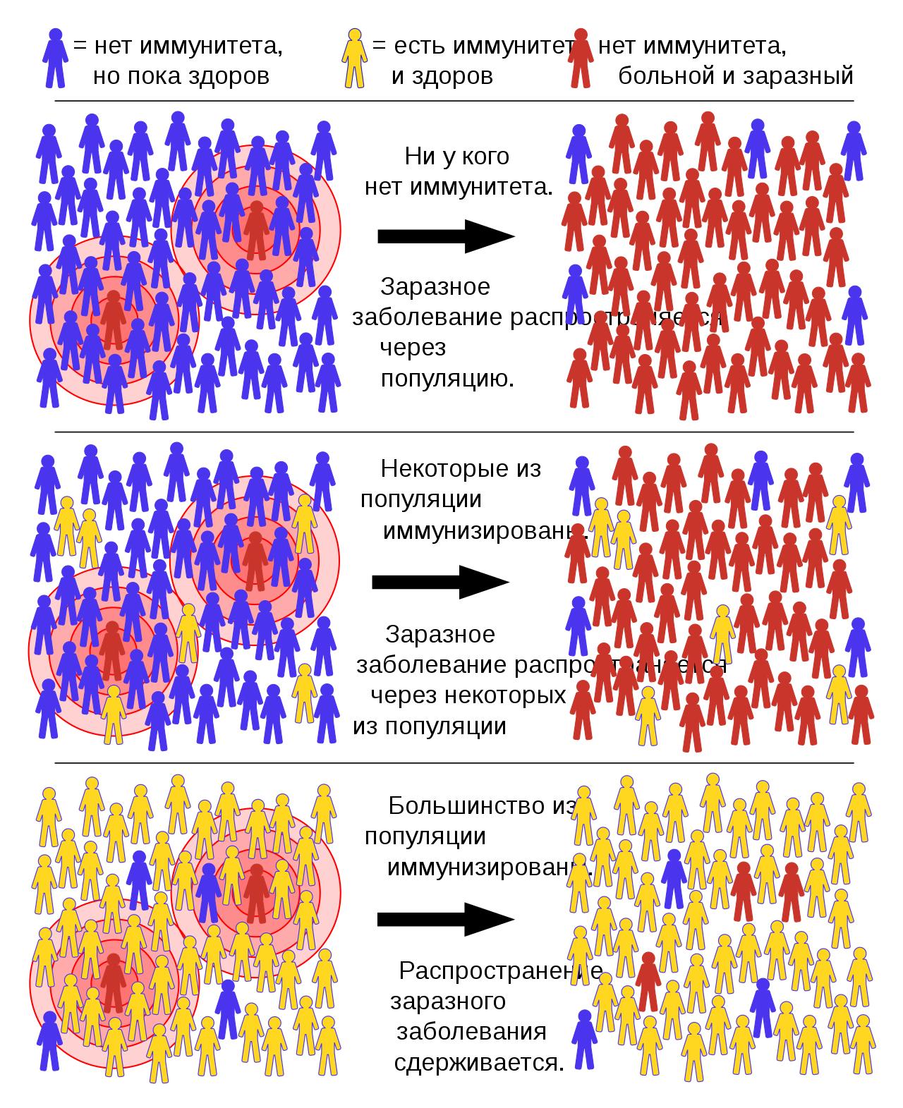 Коллективный иммунитет