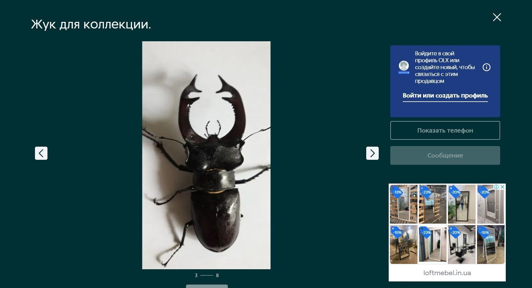 На OLX продають живого жука з Червоної книги