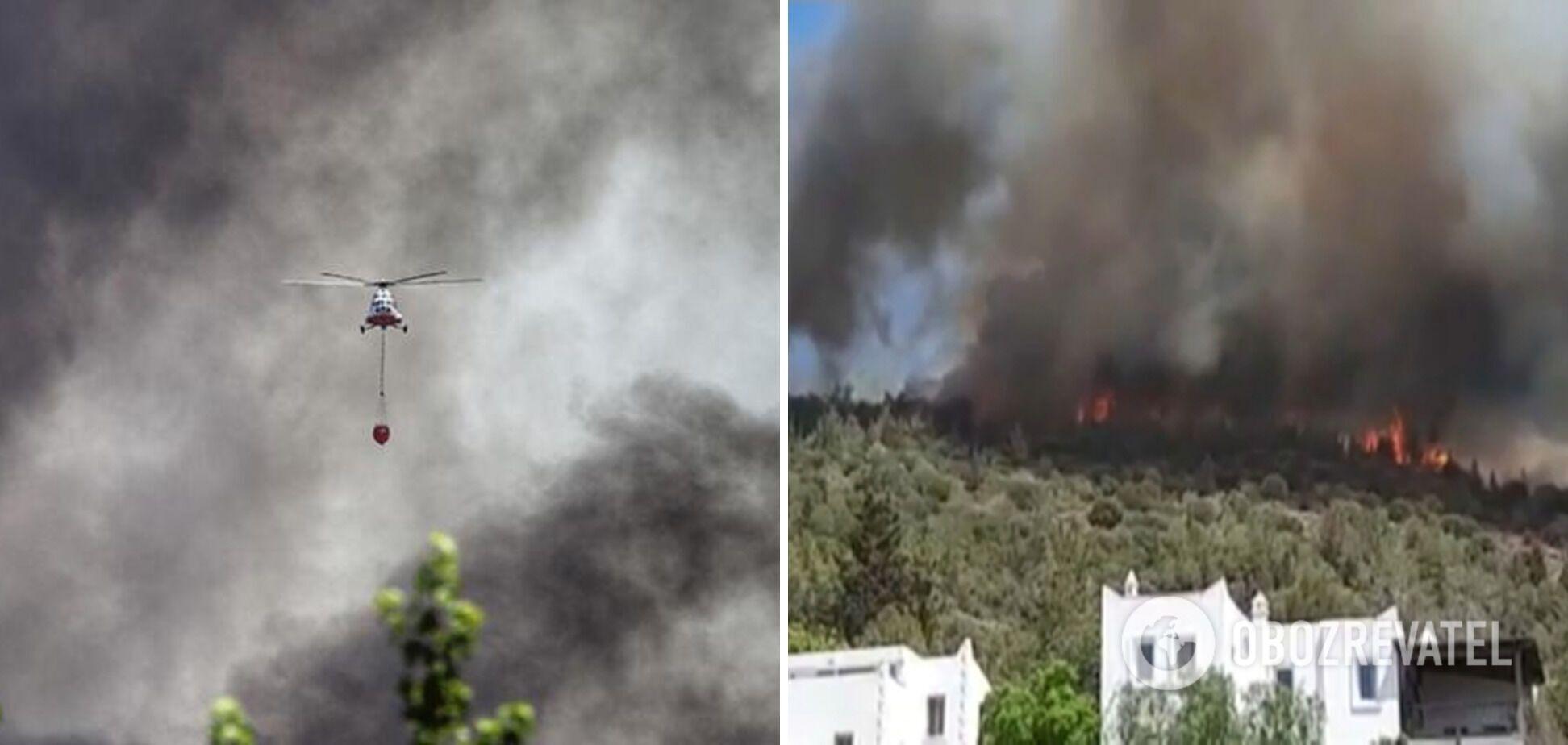Туреччину охопили масштабні лісові пожежі