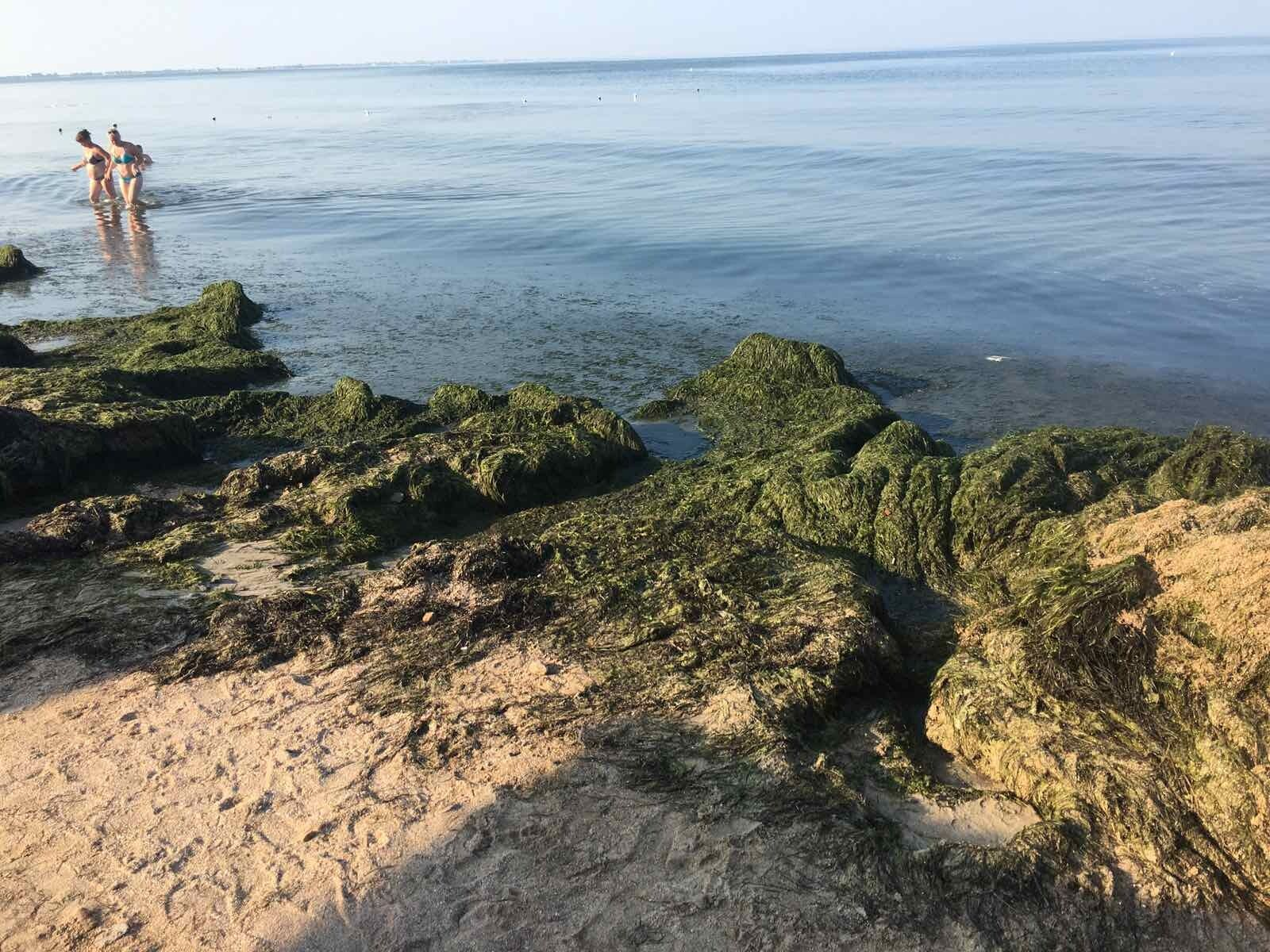 """Водоросли """"атаковали"""" пляжи Бердянска"""