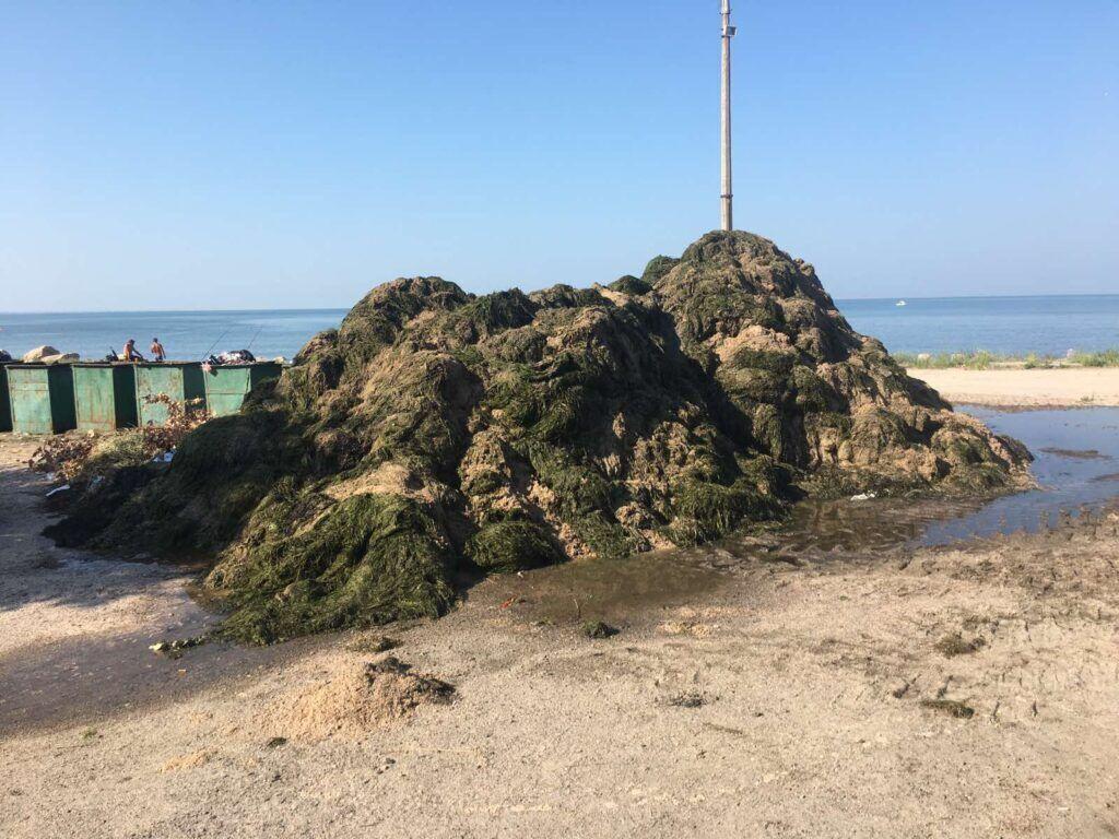 В Бердянске появились кучи водорослей