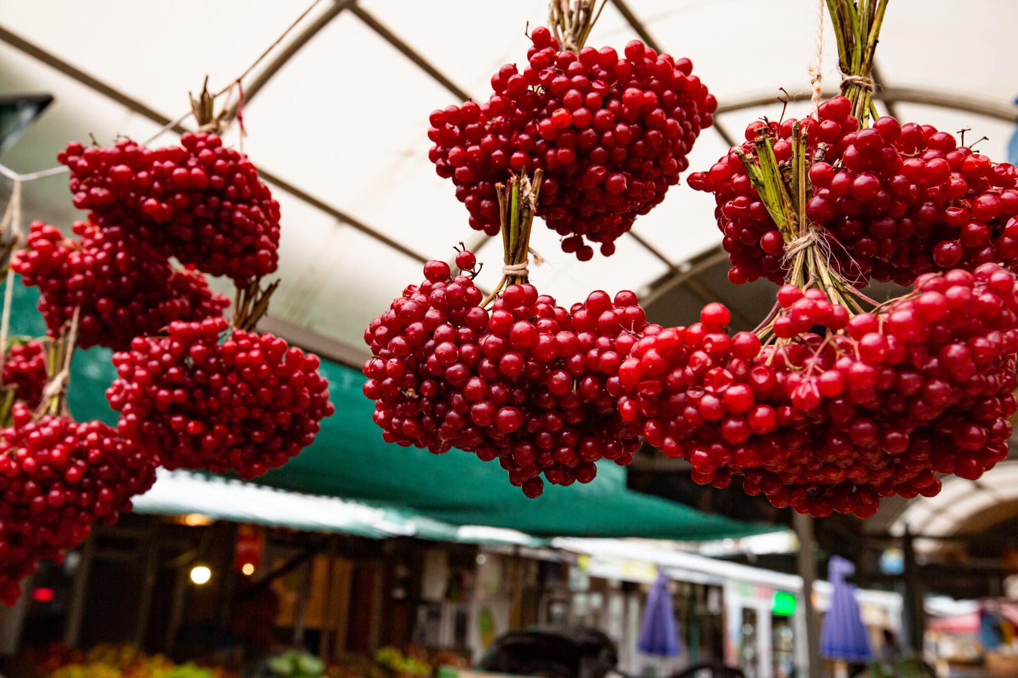 На Калинник обычно поспевают ягоды калины
