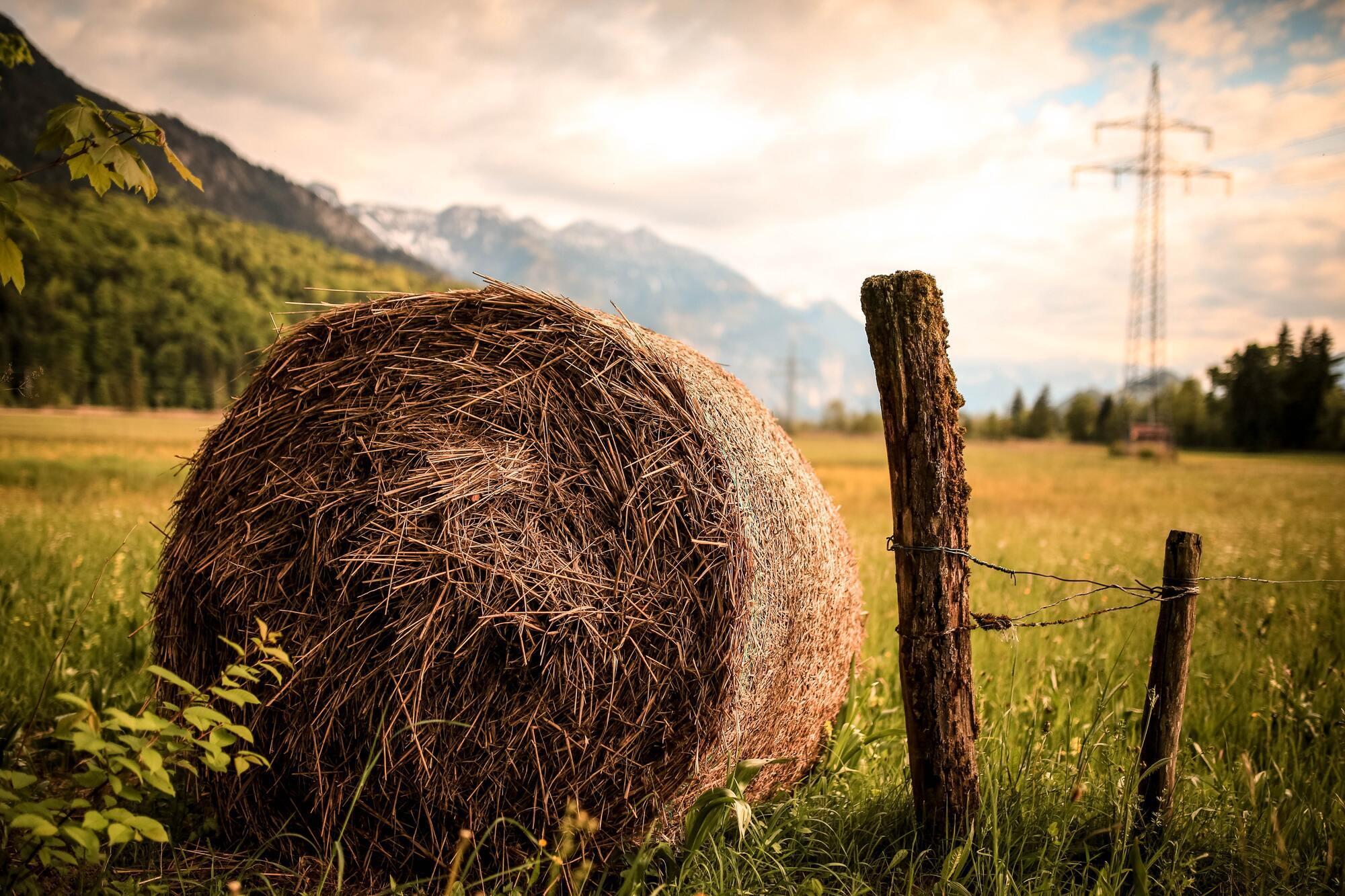 12 августа нужно прижечь пятки ведьмы соломой, чтобы та не задаивала коров до смерти