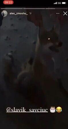 Знущання над твариною молодики зняли на камеру