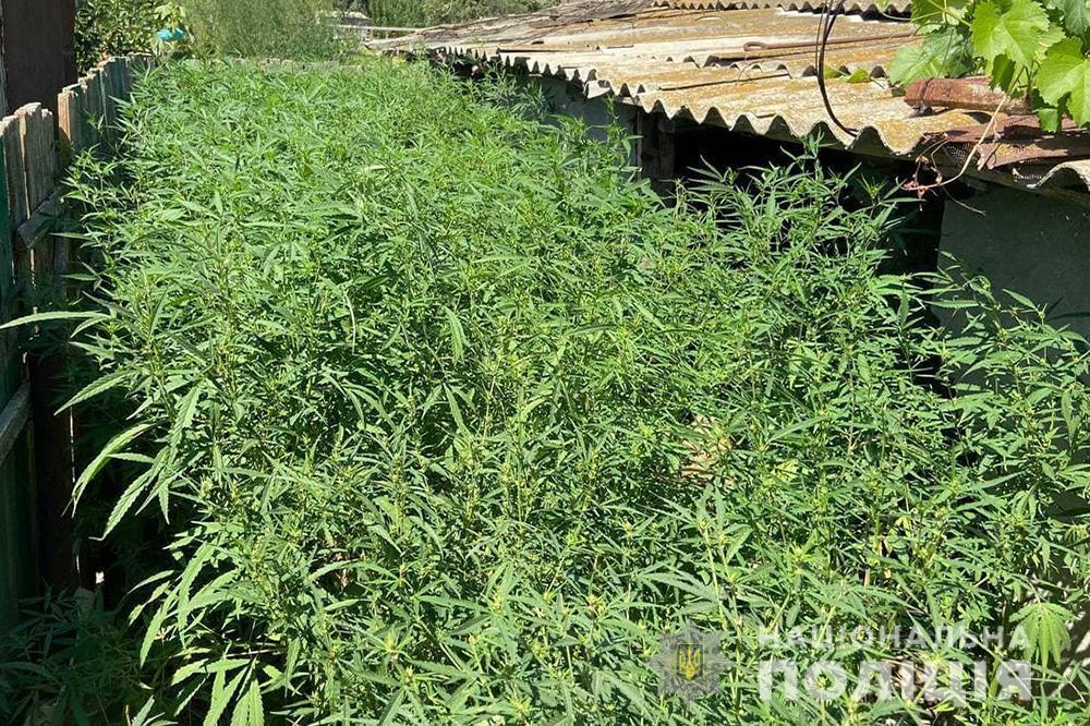 Сад из марихуаны .