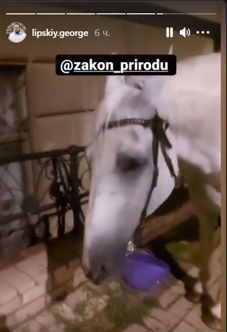 Конь смог встать.