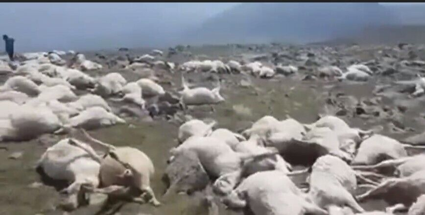 У гірському селі в Грузії понад 500 овець вбило ударом блискавки