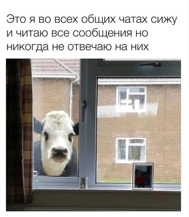 Мем о переписке