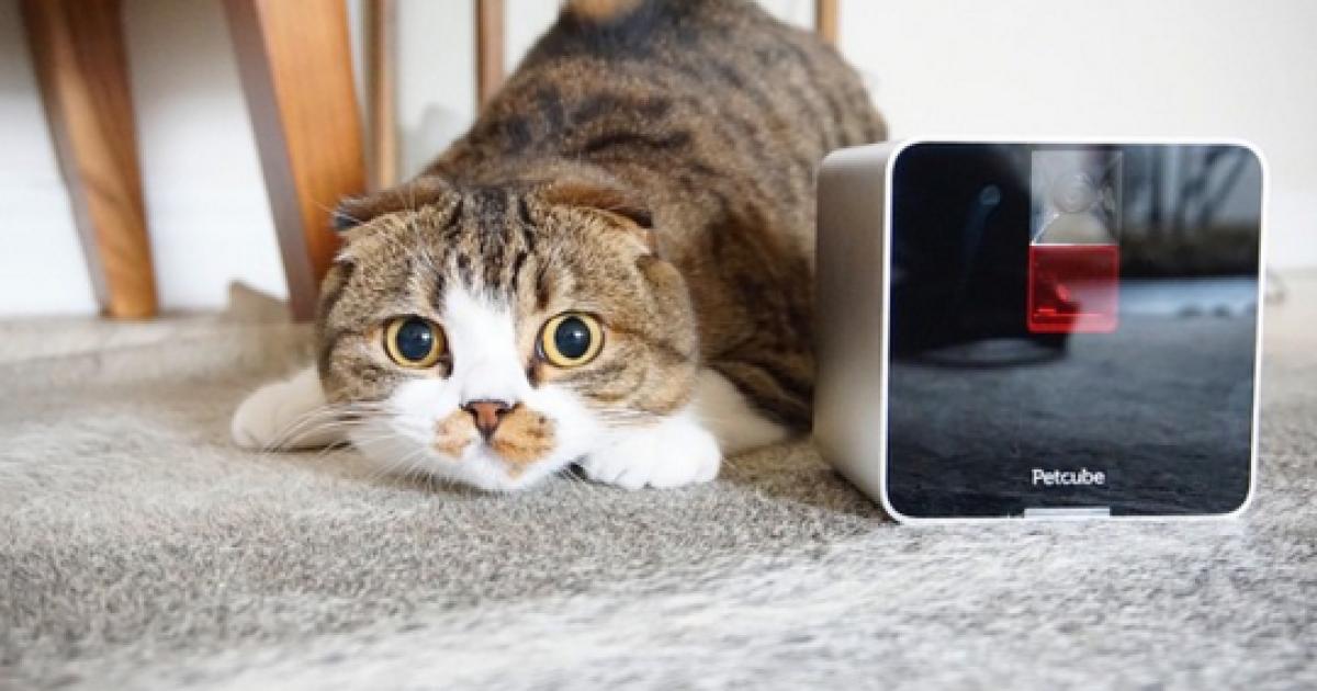 Електронний куб грається з домашніми улюбленцями, поки вас немає вдома
