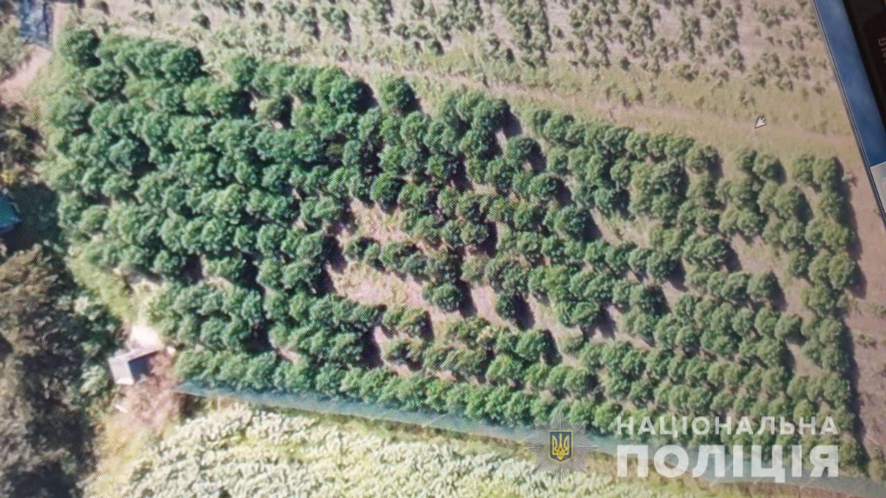 Полиция обнаружила коноплю на земельном участке.