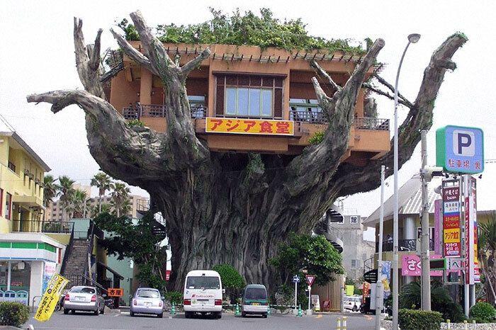 Ресторан розмістили на дереві
