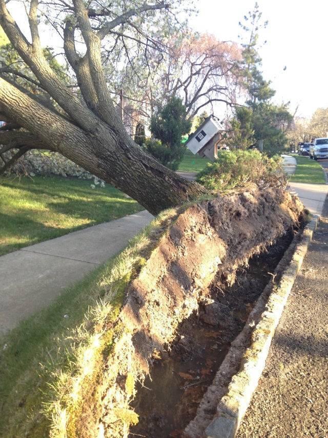 Буревій вирвав дерево на подвір'ї з коренем