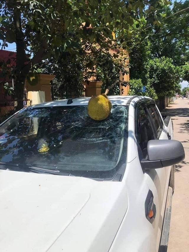 Чоловік поставив авто біля дерева