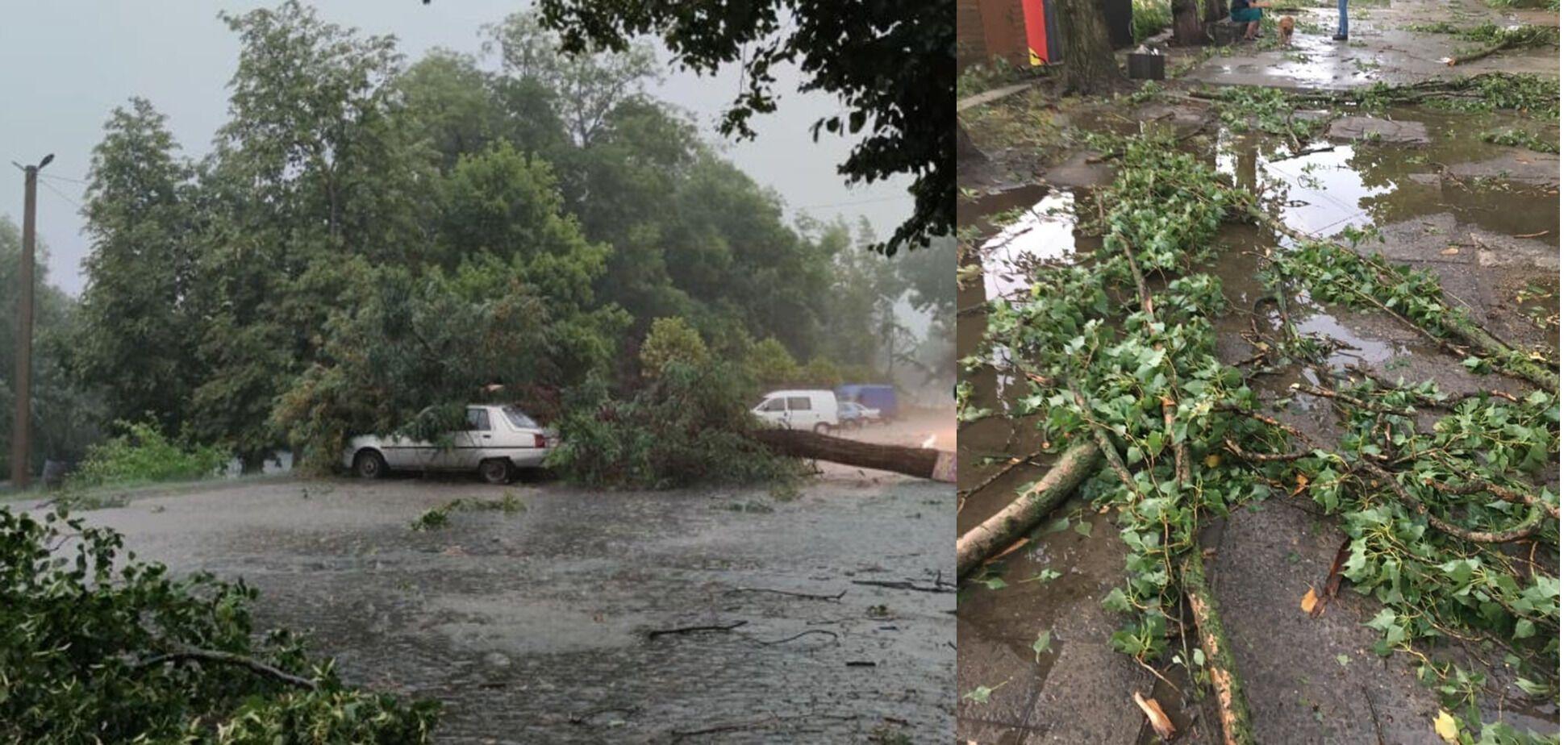 В Ужгороде дерево упало на автомобиль, пострадал водитель