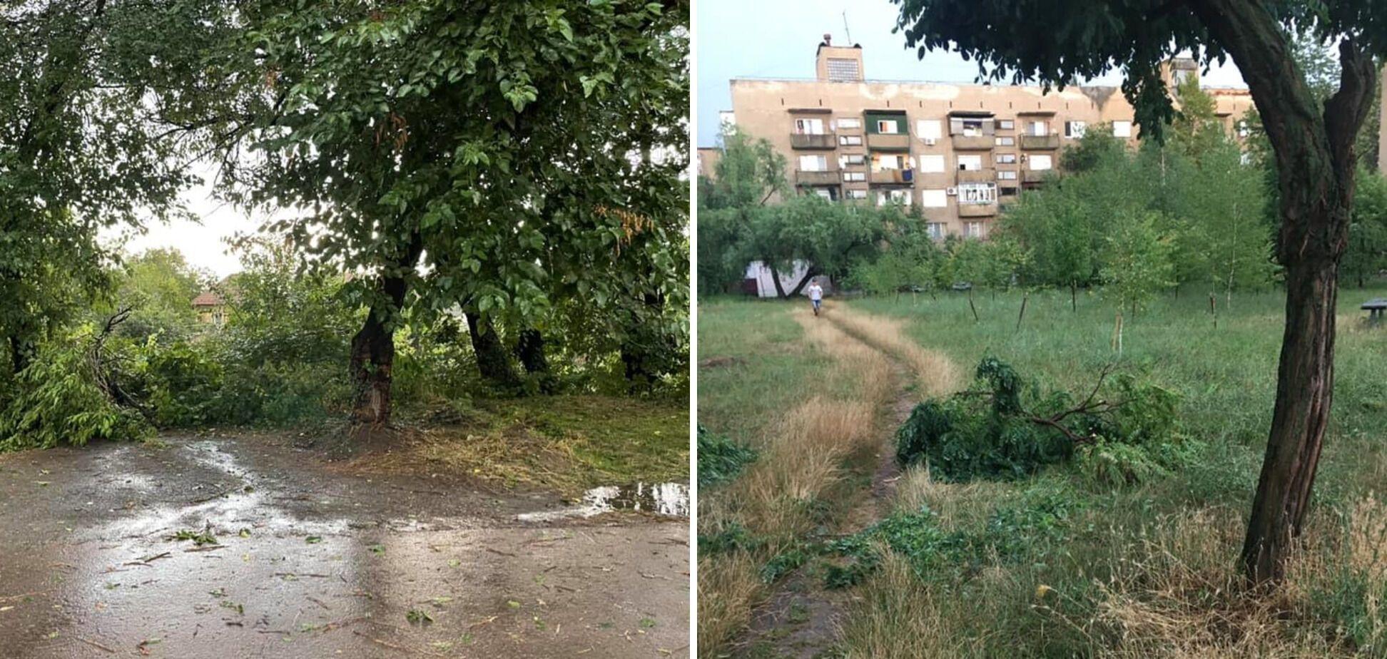 В Ужгороде ураган валил деревья