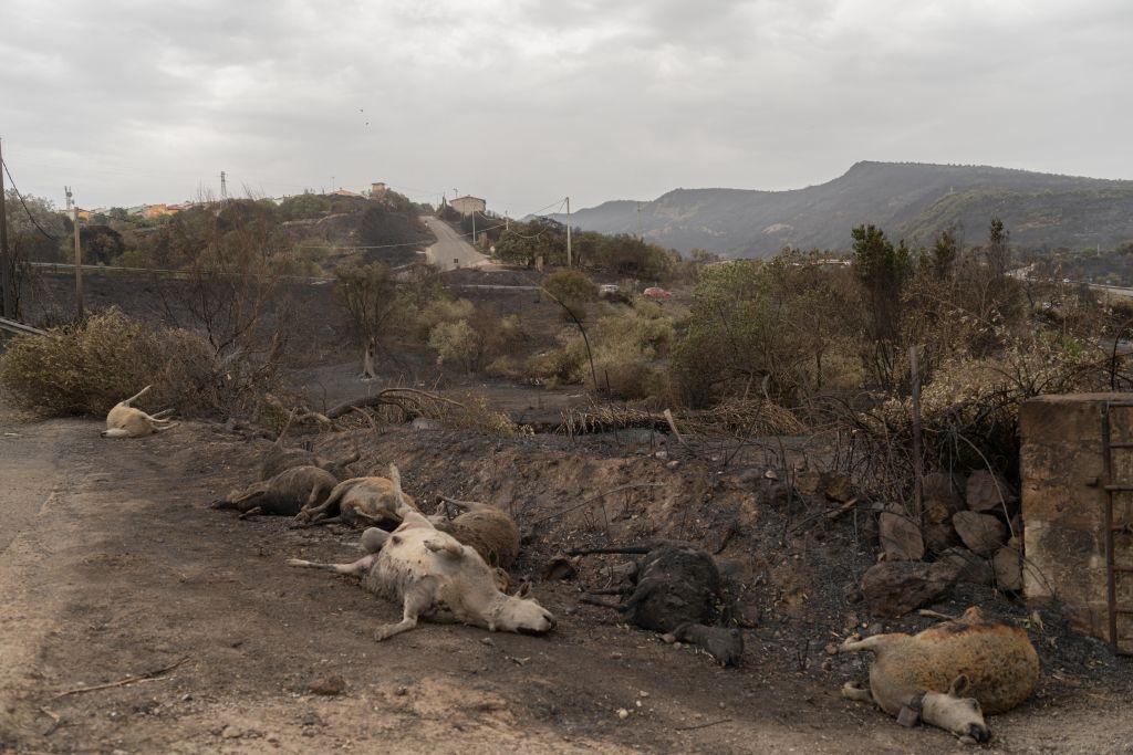 Результат пожеж в італійській провінції.
