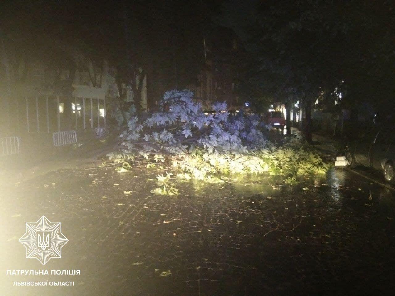 Дерево перекрыло движение на улице Князя Романа