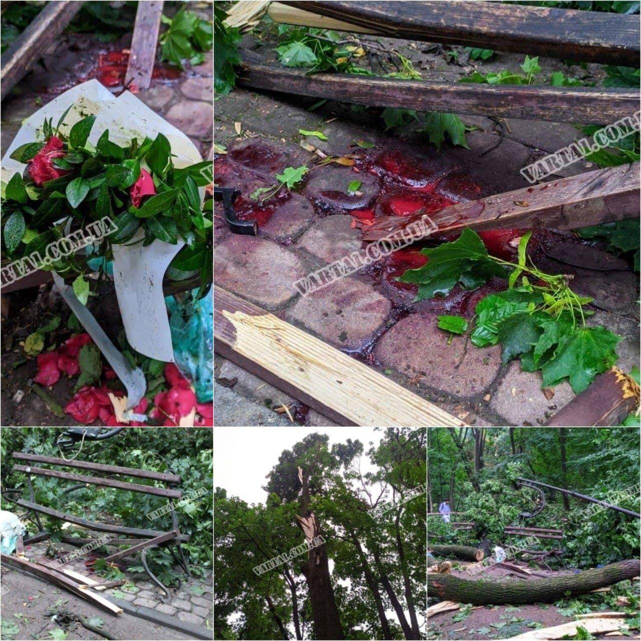 У парку у Львові на пару впало дерево.