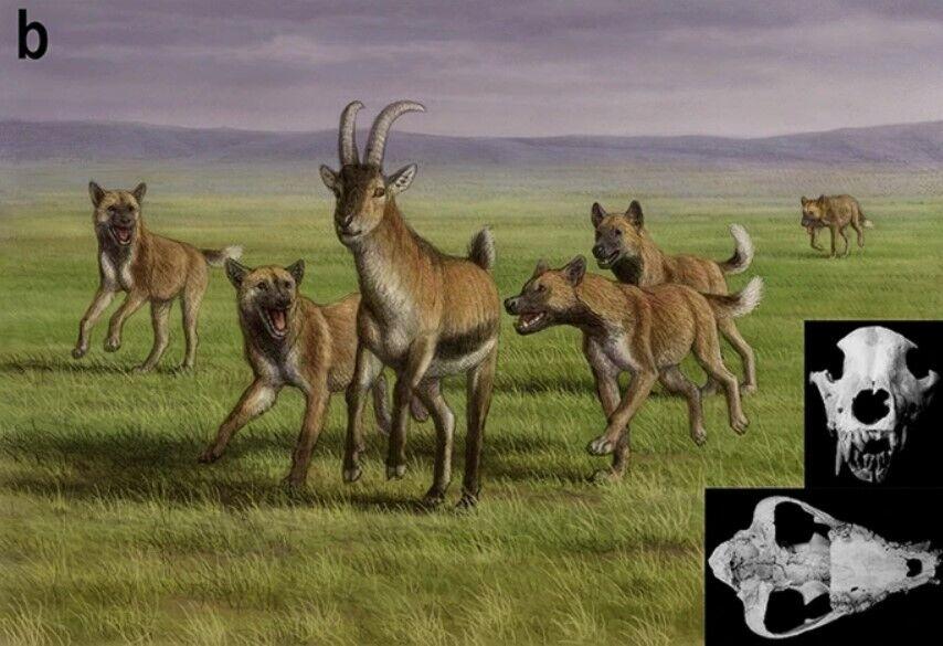 """Животное, вероятно, принадлежало к """"евразийской охотничьей"""" породе"""