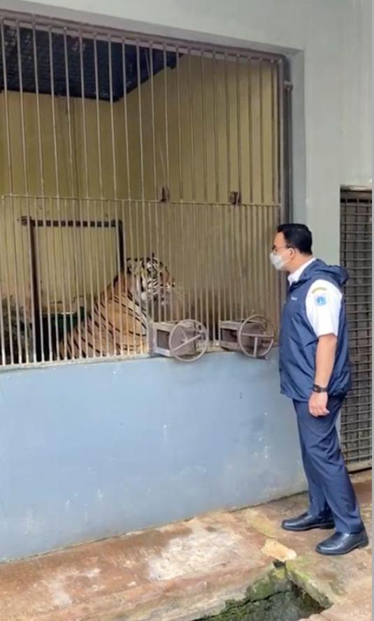 Тигров вылечили от коронавируса.