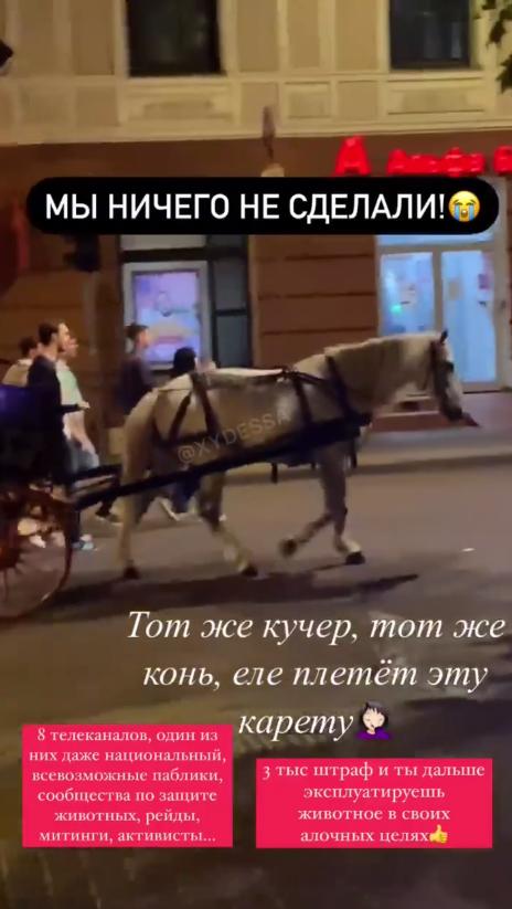 Очевидці стверджують, що це та сама кінь.