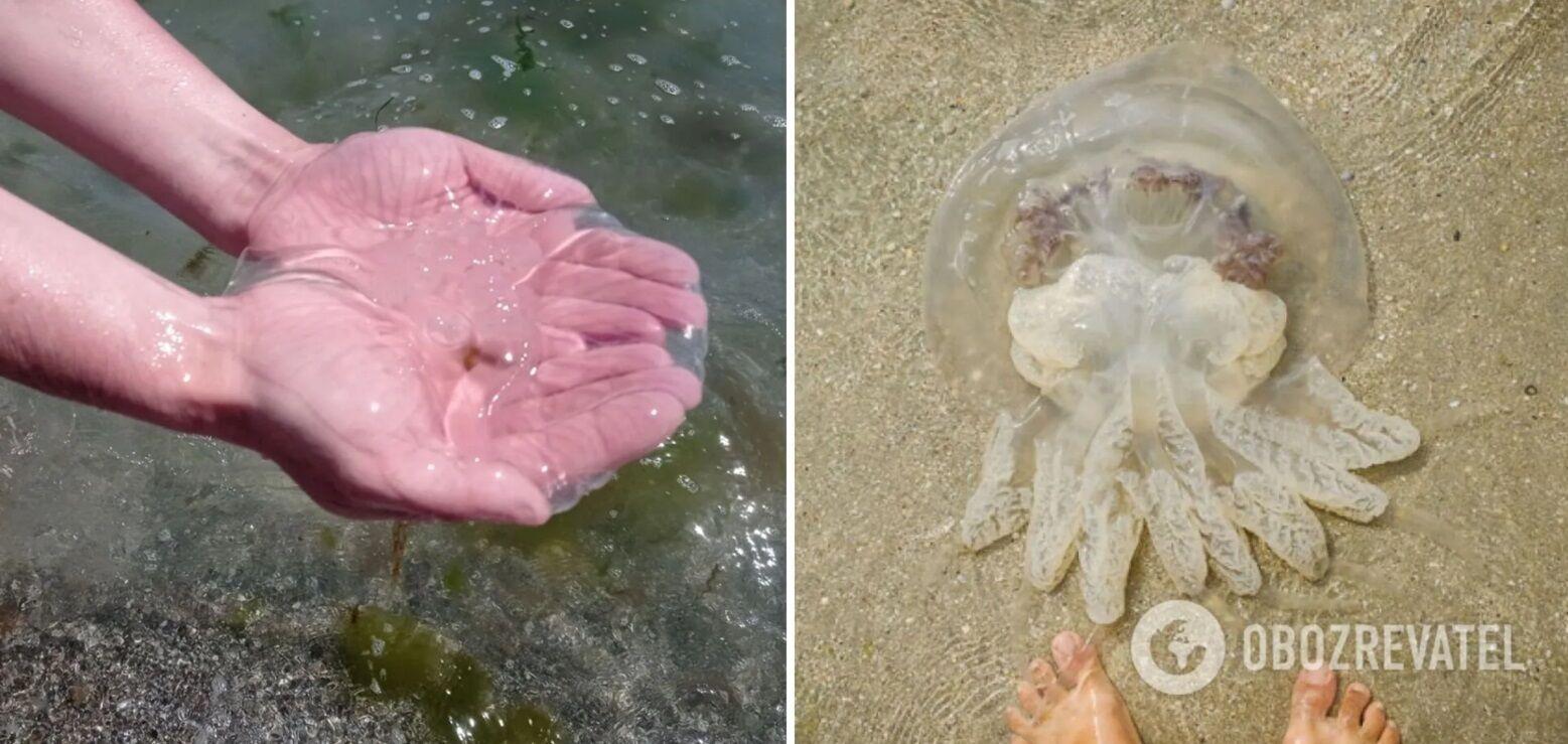 Українські курорти атакували медузи.