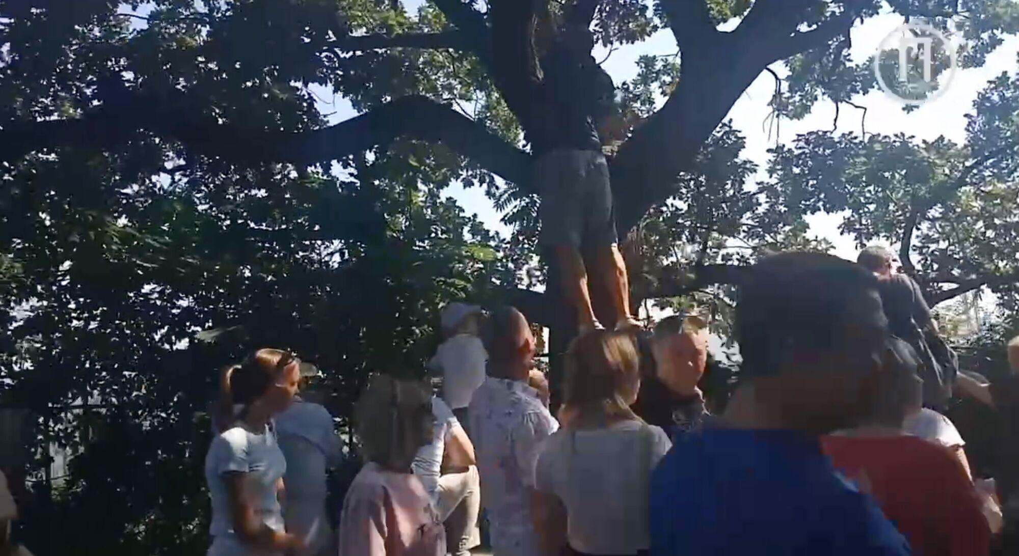 Люди залазят на деревья, чтобы увидеть парад