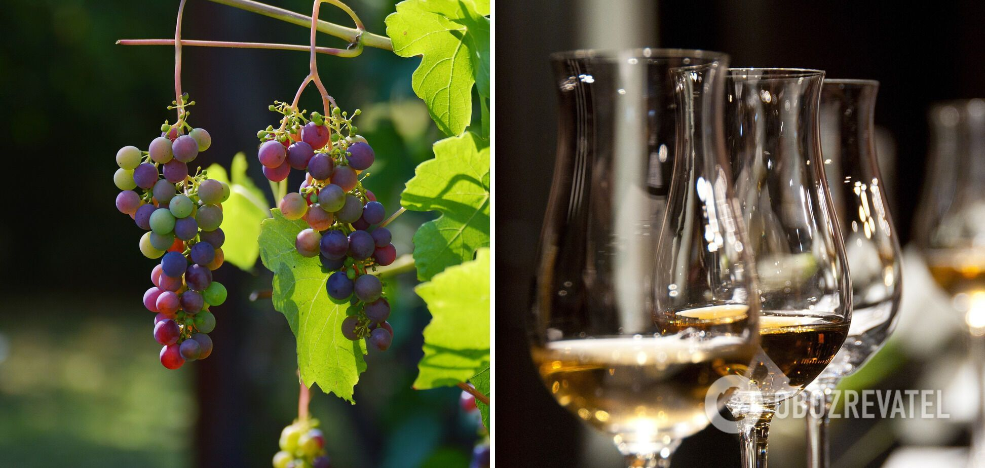 Домашнє біле вино
