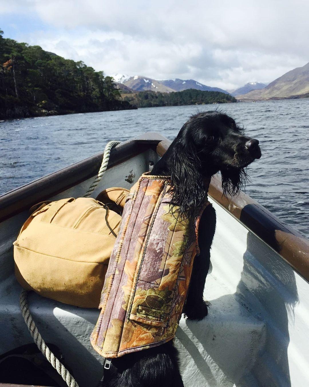 Собака Джеймса в лодке.
