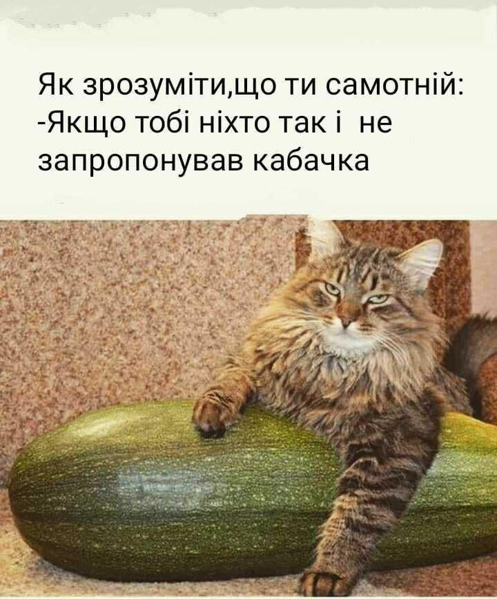 Мем о кабачках