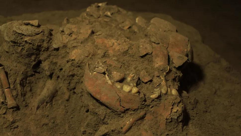 Череп і щелепа стародавньої толіанської жінки, останки якої було знайдено в печері в Південному Сулавесі, Індонезія