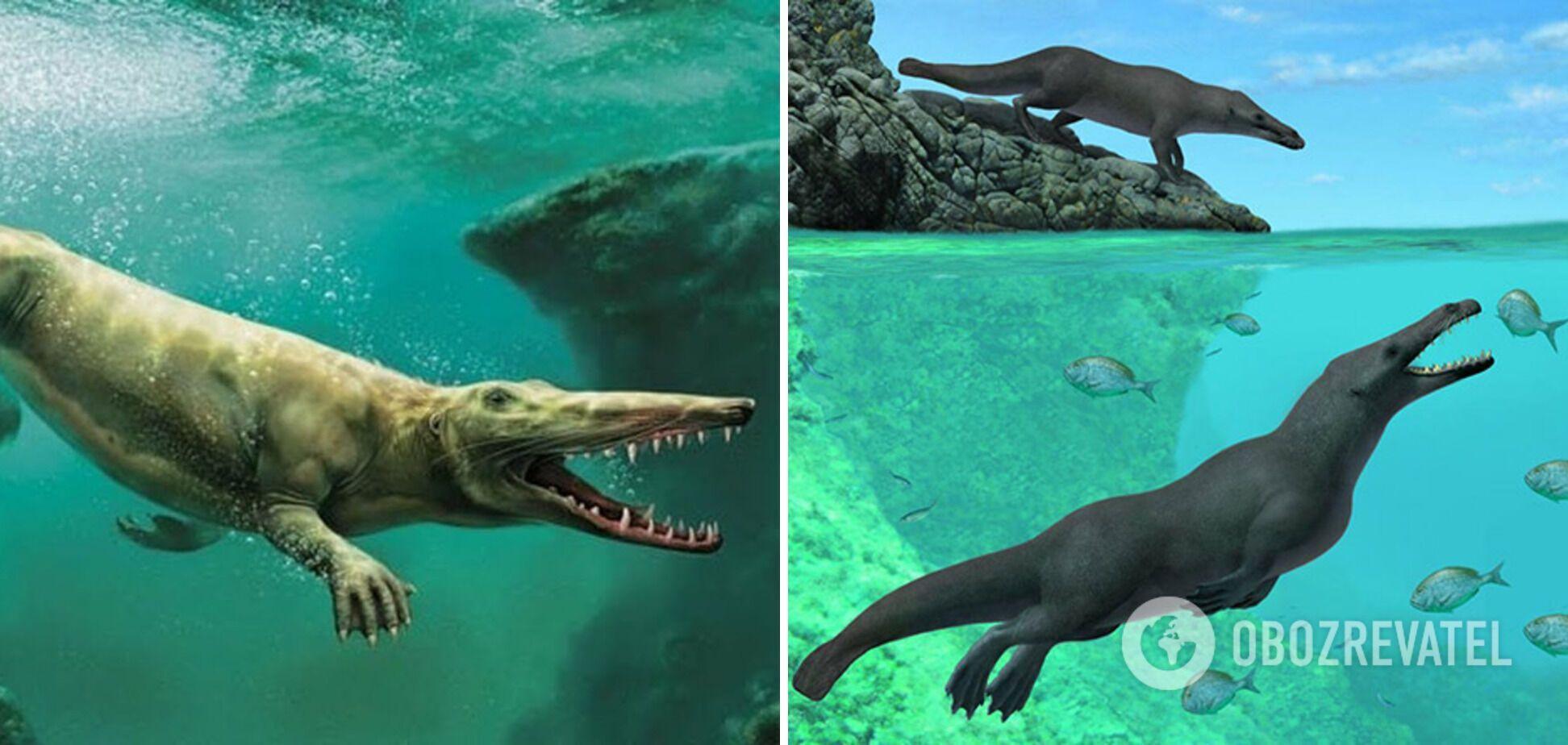 Phiomicetus anubis міг плавати у воді й ходити сушею