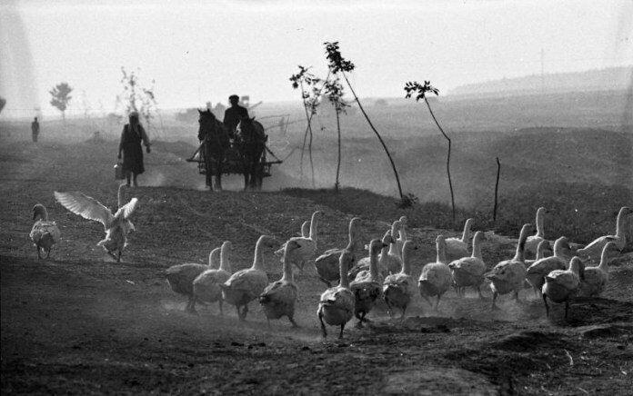 В 1974 году работники колхозов получали относительную свободу передвижения
