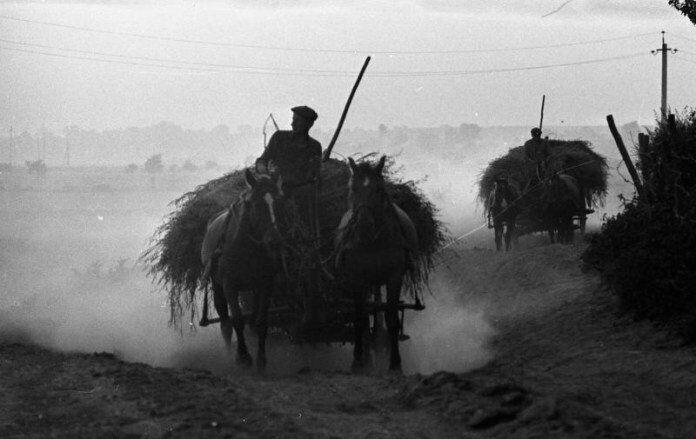 В конце 20-х годов жители сел стали массово бежать в города от коллективизации