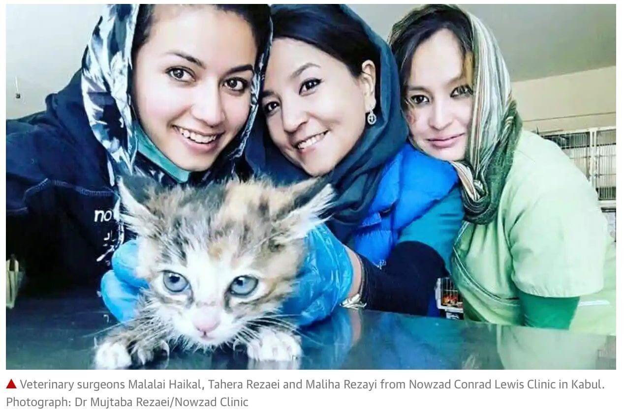 Волонтеры спасали кошек и собак
