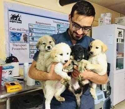 Nowzad в течение 14 лет помогал животным в Кабуле