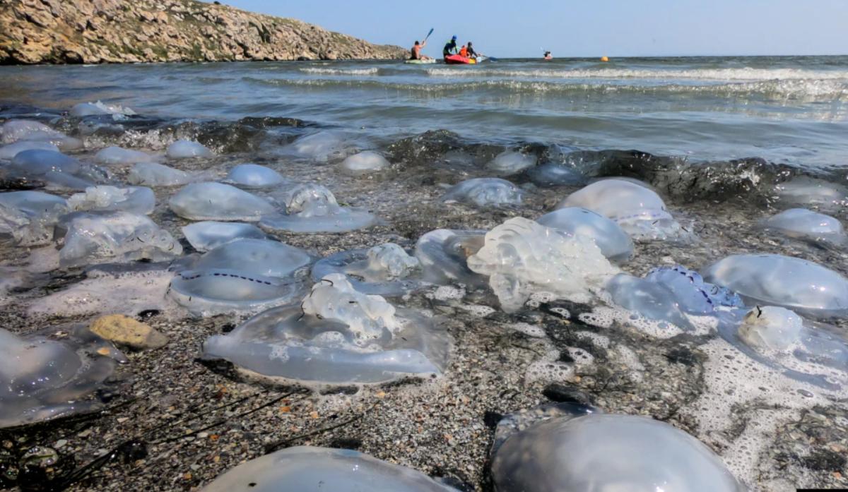 Тысячи медуз выбросило на берег