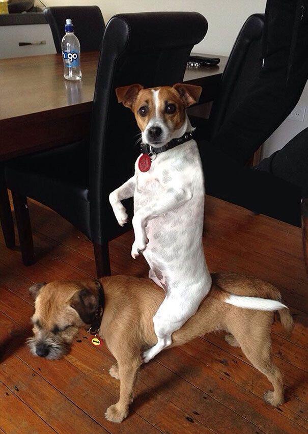 Собаки развлекались дома.