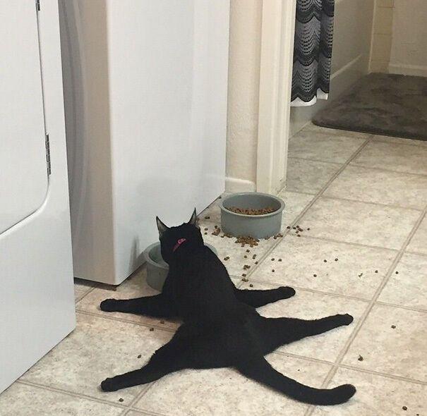 Кот ест лежа.