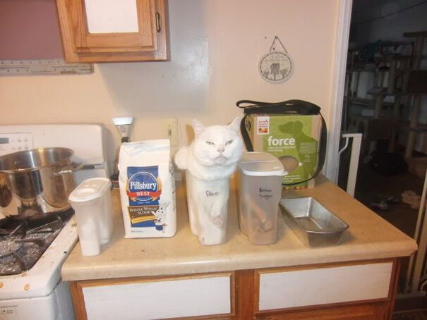 Коты любят залезать в тесные пространства.