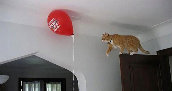 Кот охотился на воздушный шарик.