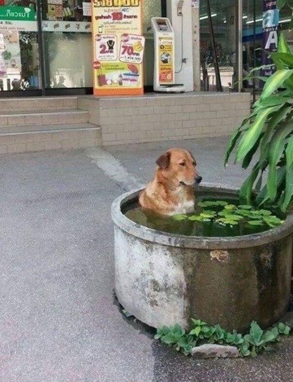 Пес ненавидит жару.
