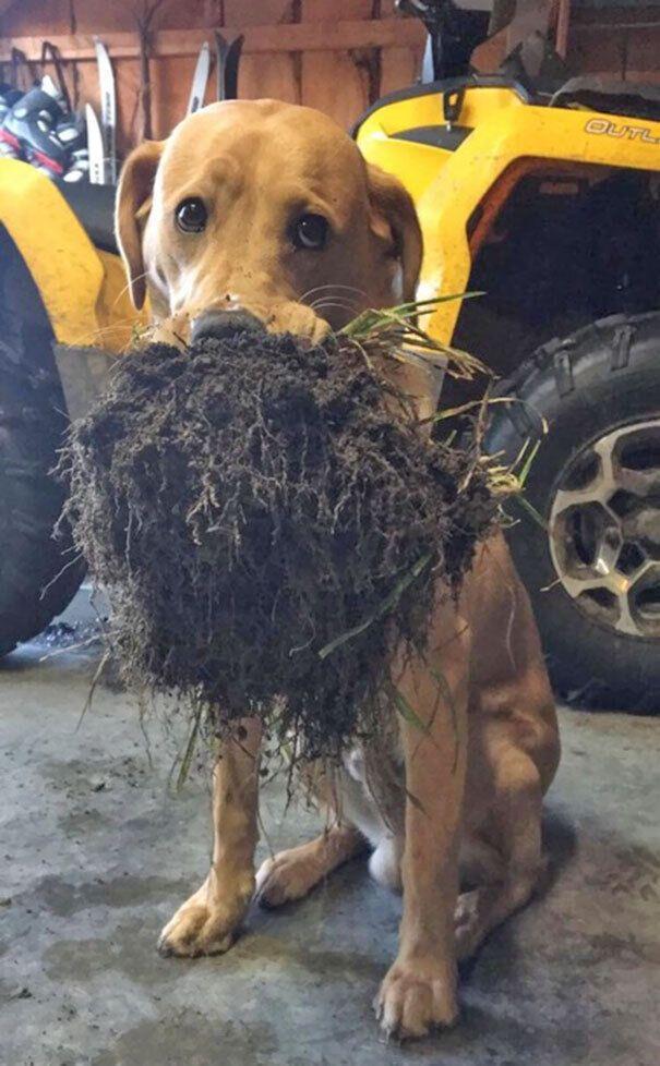 Собака принесла подарок.