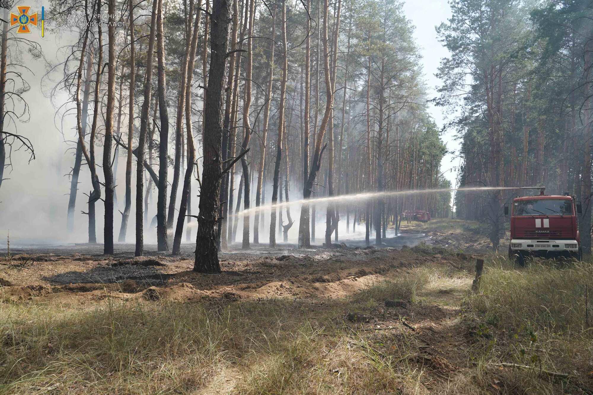 Спасатели прибыли тушить лес.