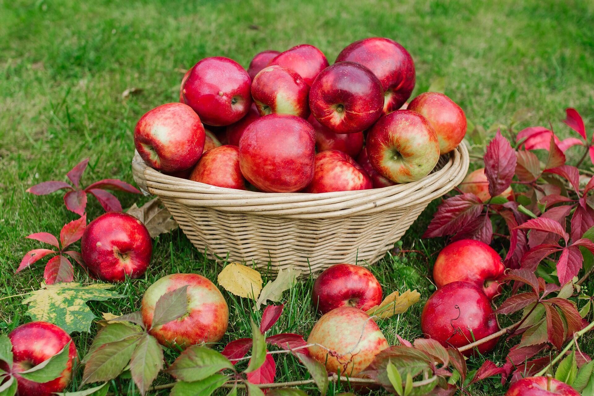 На початку осені дачники займаються збиранням врожаю